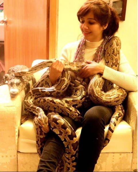 Actions taken against Rabi Pirzada for illegal captivity of wild animal