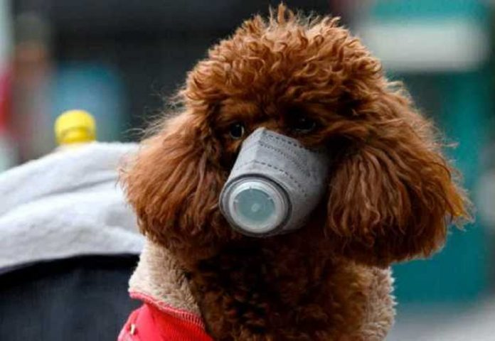 Pet dog of coronavirus patient in Hong Kong infected with the virus