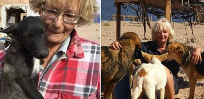 British woman beaten to death by three dogs that she helped look after